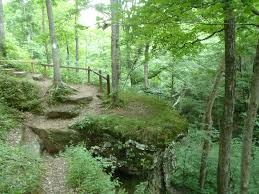 Indiana forest images Best trails in hoosier national forest indiana 664 photos jpg
