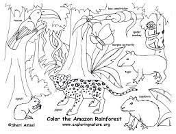 rainforest color pictures rainforest amazon coloring