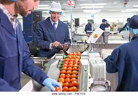 food processing quality control technician food processing plant stock photos u0026 food processing plant stock