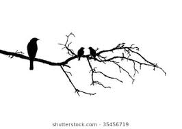 birds on branch images stock photos vectors