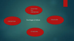 the stages of cell division by mark desilva prophase pro