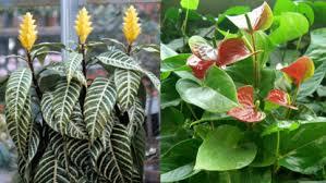 no sun plants indoor plant no sunlight