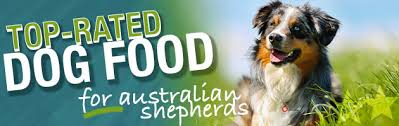 buy a australian shepherd what is the best dog food for an australian shepherd