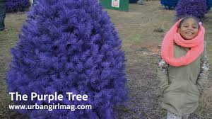 buying a real colored christmas tree from wyckoff farms in nj