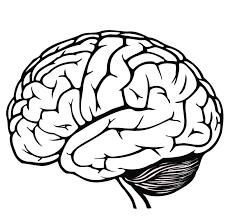 Gallery Brain Outline Printable Human Anatomy Diagram Brain Coloring Page