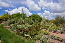 plants native to arizona desert botanical garden phoenix central arizona traveldigg com