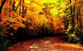 fall autumn walking into autumn 8 hours of relaxing music with fall