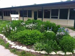 native water plants water smart steps to establishing your native plants dyck arboretum
