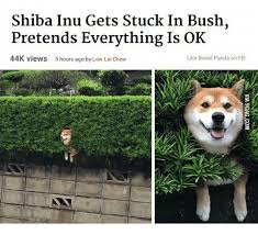 Shiba Inus Meme - 25 best memes about shiba inu in bush shiba inu in bush memes