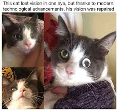 Googly Eyes Meme - this cat lost vision in one eye but thanks to modern technological