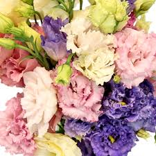 lisianthus flower frill lisianthus flower for june to september delivery