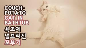 Cat In Bathtub Couch Potato Cat In Bathtub Youtube