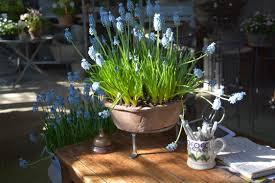 Plants Indoors by Growing Garden Plants Indoors Dirt Simple