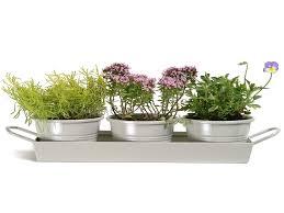 self watering indoor planters kitchen delectable com kitchen herb kit three self watering indoor