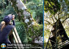 canopy amazon 8 of the top canopy tours in the amazon rainforest
