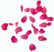 11 rose petal tattoos heraldisch lippische rose black white
