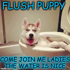 Clean Animal Memes - i like to keep my water bowl fresh and clean during dog week imgflip