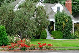 Small Shrubs For Front Yard - plant recommendations zones 3 5 edible landscaping with rosalind