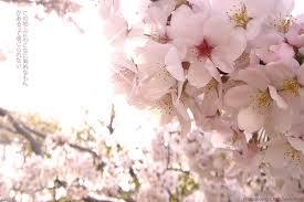 Amigo Sunset Flowers - Page 2 Images?q=tbn:ANd9GcRF0diQwmlmTwHgn-GF0yzeM5NYBB8bmLMqEr63_0eh9IbI-VH7YQ