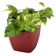 100 good houseplants for low light pretty indoor flowering