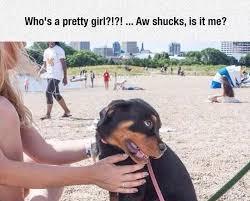 Pretty Girl Meme - pretty girl meme by soydolphin memedroid