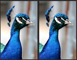 using the color changer tool in corel paintshop pro u2013 knowledge base