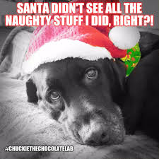 funny angry dog memes angry best of the funny meme