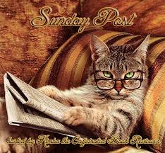 Newspaper Cat Meme - sunday post 7th edition rainy day ramblings