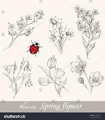 spring flower set vintage floral collection stock vector 130660121