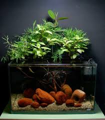 how to setup a planted aquarium for betta fish fighter fish betta