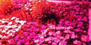 philips led grow light led strip grow light prediter info
