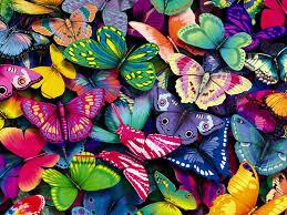 pics of butterflies 9221