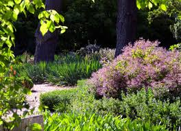 Drought Tolerant Backyard Ideas The Inspirations For Having The Fascinating Drought Tolerant
