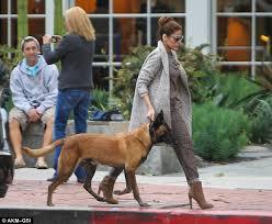 belgian malinois in movies eva mendes keeps her dog hugo close while ryan gosling edits his