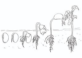 planting seeds coloring pages eson me