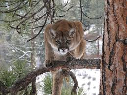 Montana wildlife images Montana fish wildlife parks region 1 home facebook