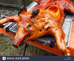 a dramatically crispy roasted pig on a rack outdoors just removed