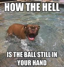 Funny As Hell Memes - how the hell is the ball still in your hand funny dog pictures