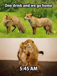 Taxidermy Fox Meme - bad taxidermy home facebook