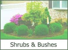 Small Shrubs For Front Yard - garden design garden design with landscaping ideas small shrubs