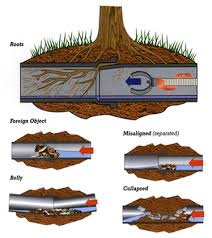 root removal services los angeles ca