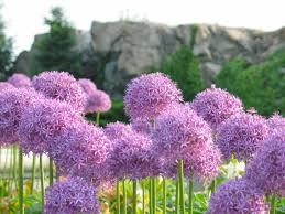 Images Flowers Flower поиск в Google Flower Pinterest Flowers Flower And