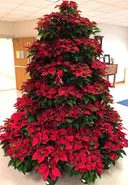 poinsettia tree northview beta club creates living poinsettia christmas tree