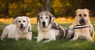 imagenes de animales y cosas las mascotas pasarán a ser considerados seres vivos y no cosas