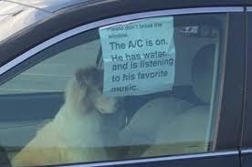 viral tweet sparks debate about rescuing pets in cars motor