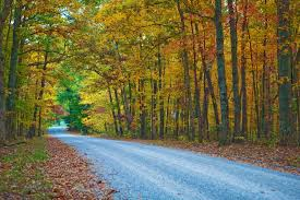 Tennessee Forest images Tennessee 39 s beautiful trees tennessee land jpg