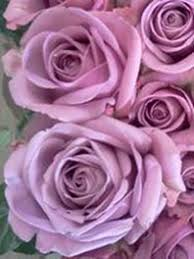 purple roses for sale purple flowers for sale lavendar flowers flower explosion