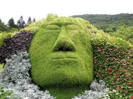 Horse Topiary One Man U0027s Funnies Topiary Face Like