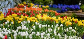 spring flower show scents of wonder phipps conservatory and