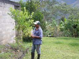 republic macadamia trees offer lifeline to small